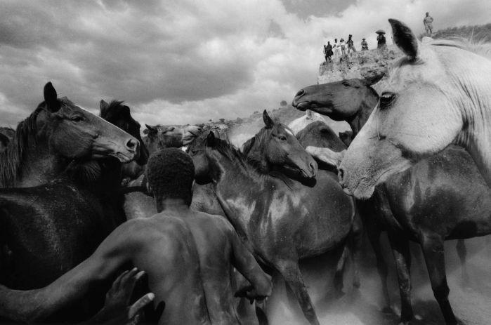 """Ulrich Mack: """"Wildpferde in Kenia"""", 1964 © Ulrich Mack, Hamburg. Aus der Ausstellung AUGEN AUF! - 100 JAHRE LEICA-FOTOGRAFIE, 24. Oktober 2014 bis 11. Januar 2015 in den Deichtorhallen Hamburg / Haus der Photographie."""