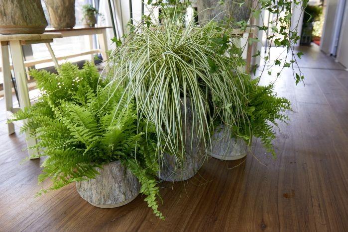 Pflanzenfreude Blogger Brunch 2015_3